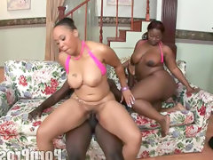 Two chubby babes are sharing big black dick